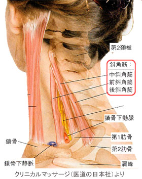 Ι 整体・接骨は口コミNO.1:むち打ち、首痛、首こり、肩こり、猫背、背骨【脊椎のゆがみ、傾き(
