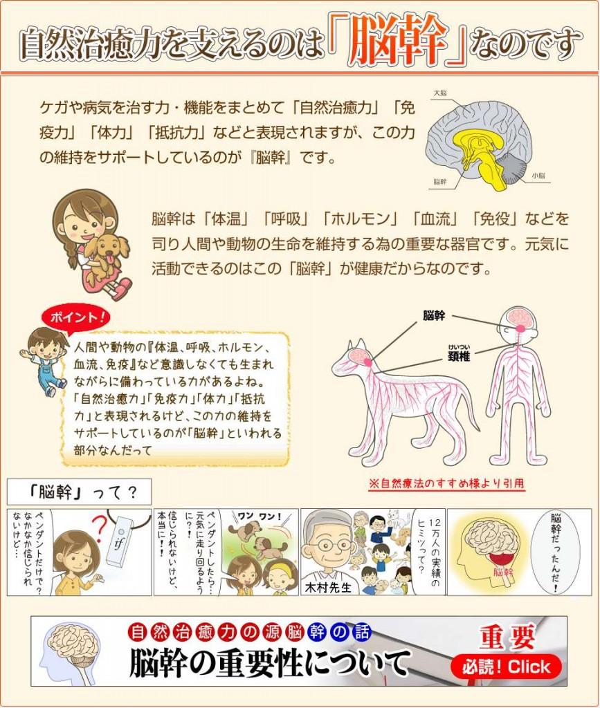 自然治癒力・脳幹12