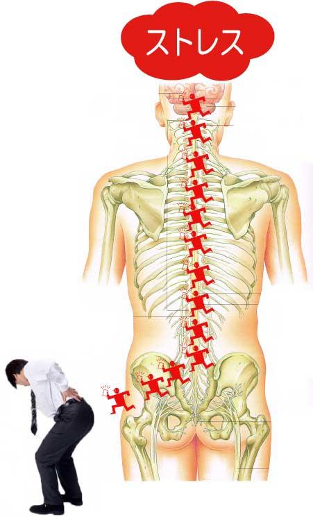 脊椎・骨盤のゆがみ6
