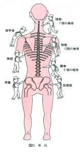 脊椎・骨盤のゆがみ8